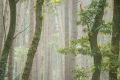 Bos bij de Hoorneboegse-Heide