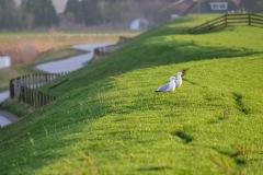 IJsselmeerdijk-bij-Piaam