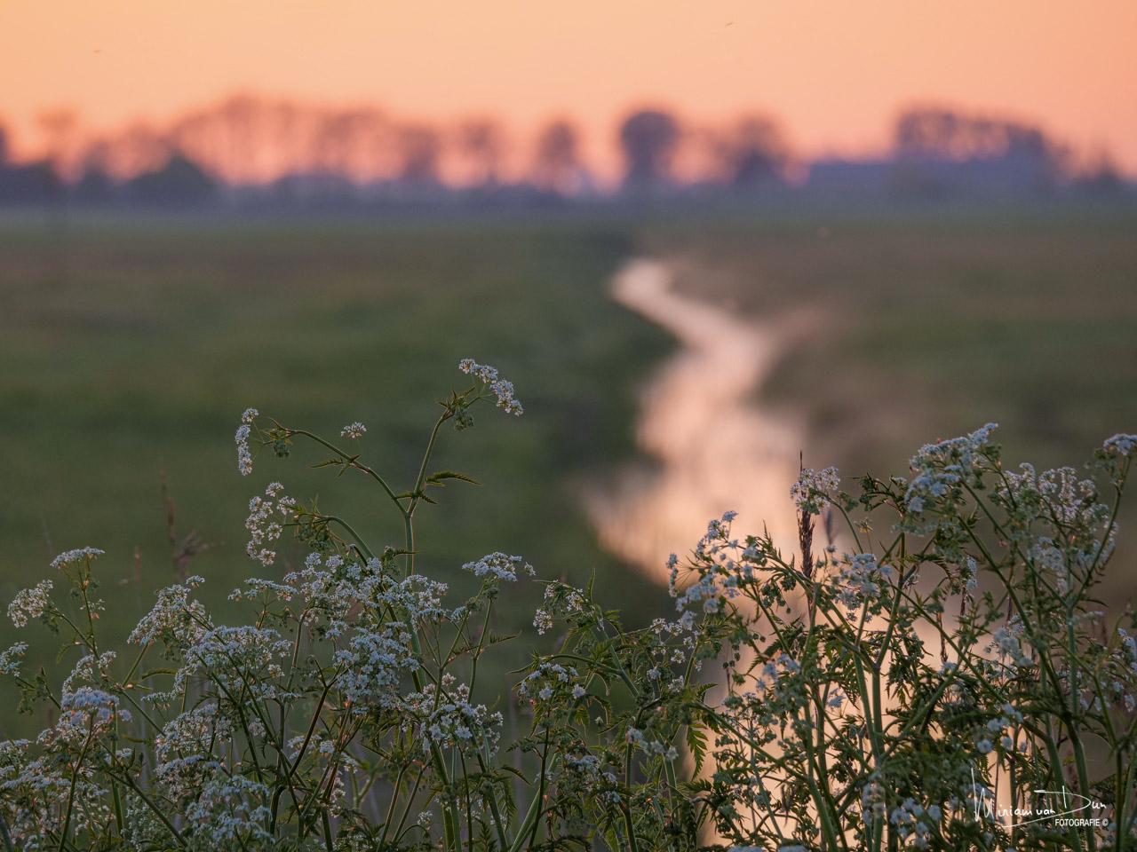 De-Legean - Friesland