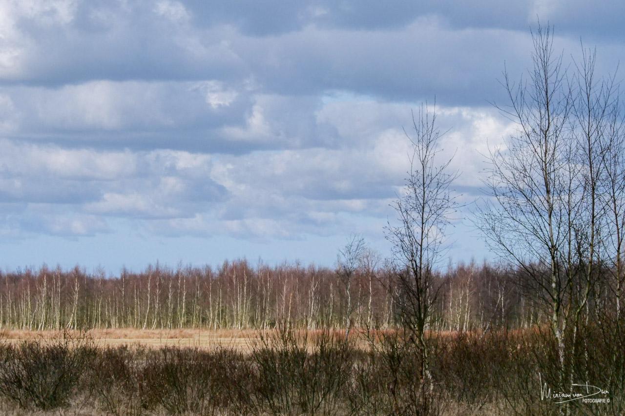 Fochtelooerveen
