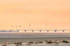 Zeelandbrug met lepelaars en zeehonden